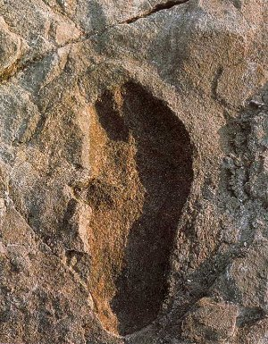 Laetoli footprint